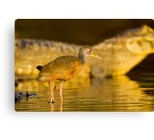 Grey-necked Wood Rail, Brazil Canvas Print