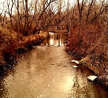 Creek Bank by photosbyliz