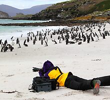 Magellanic Penguins Under Scrutiny by Carole-Anne