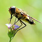 Bee Fly 1 by Dawne Dunton