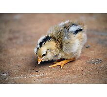 Chick Photographic Print