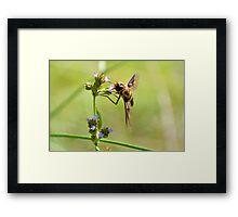 Bee Fly 3 Framed Print