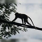 Monkey Silhouette by Keith Richardson
