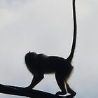 Monkey on a High Wire by Keith Richardson