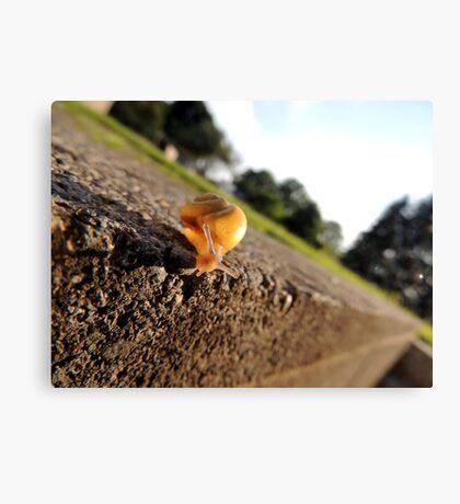 Oh Hai Mr. Snail Canvas Print