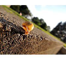 Oh Hai Mr. Snail Photographic Print