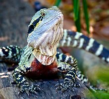 Eastern Water Dragon by Renee Hubbard Fine Art Photography