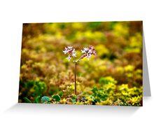 Tiny Alpine Flowers Greeting Card