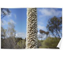 Xanthorrhoea australis ~ Cooack Settlement rd, Victoria Poster