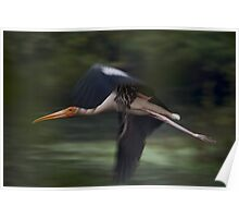 Painted stork in flight with blurred wings Poster