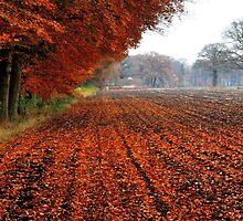 A last treat of autumn by jchanders