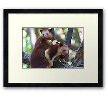 Mother & Child ~ Tree Kangaroos Framed Print