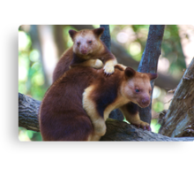 Mother & Child ~ Tree Kangaroos Canvas Print