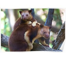 Mother & Child ~ Tree Kangaroos Poster