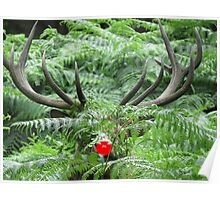 Rudolph in Camouflage Poster
