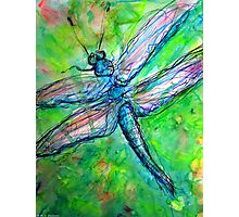 Blue Dragonfly in Spring Photographic Print