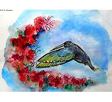 Hummingbird in Flight With Red Flowers Photographic Print