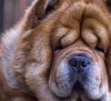 Chow dog portrait Sticker