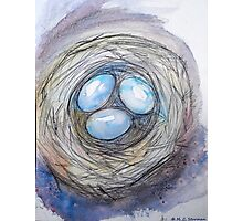Nest Eggs Photographic Print