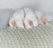 Cat's Paw by Cee Neuner