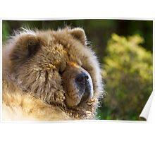 Ms Tea - Chow Chow Poster