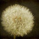 Textured Dandelion by Sarah Couzens