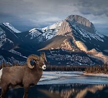 Bighorn Ram Sheep at Waters Edge by Randall Nyhof