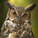 Great Horned Owl by Randall Nyhof