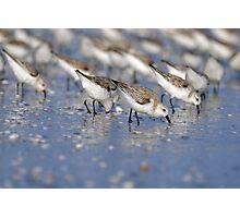 Sanderlings Repeating Pattern Photographic Print