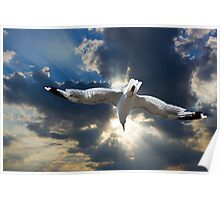 Gull Flying into a radiant sunset Poster