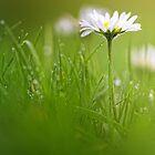 Just soak in the grass.... by Bob Daalder