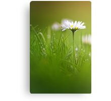 Just soak in the grass.... Canvas Print
