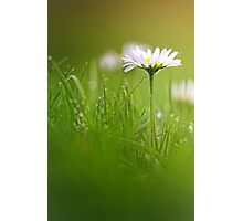 Just soak in the grass.... Photographic Print