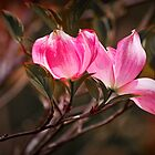 Pink Flower Tree Blossoms by Randall Nyhof