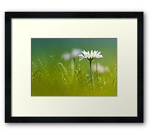 Just soak in the grass.... II Framed Print