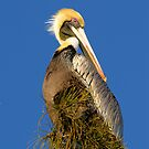 Birds of Florida by Heather Pickard