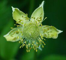 Thimbleweed by KarenLR