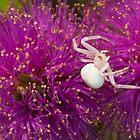 Casper, the friendly spider by ImagesbyDi