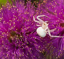 Casper, the friendly spider by ImagesbyDi