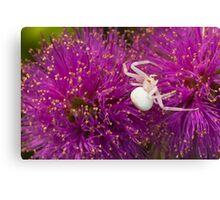 Casper, the friendly spider Canvas Print