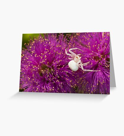 Casper, the friendly spider Greeting Card