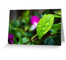 rain leaf Greeting Card