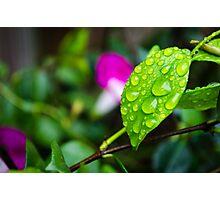 rain leaf Photographic Print