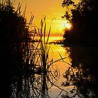 Lake Sunrise by Douglas Hamilton
