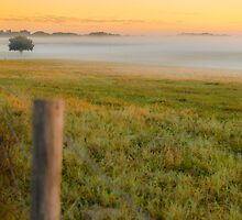 Morning Field of Fog by Douglas Hamilton