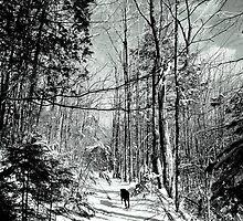 My Hike With Rocky Nov. 2013 by Elfriede Fulda