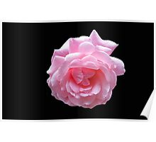 Pretty Pink Rose On Black Background Poster
