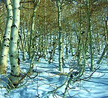 Aspens And Snow by marilyn diaz