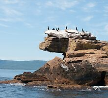 Bird Islands Cormorants by Gary Chapple