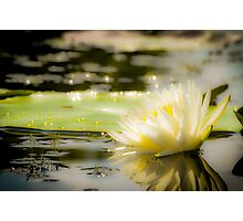 White lily in water on the lake Photographic Print